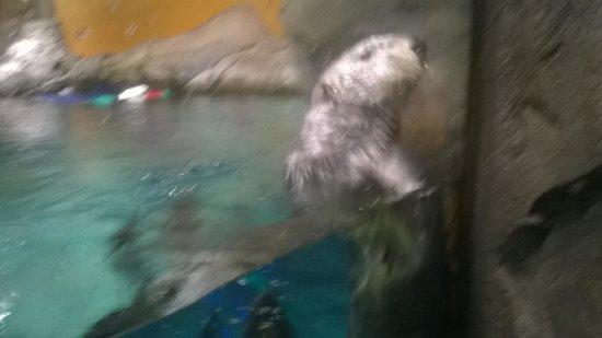 Georgia Aquarium : cute? :)