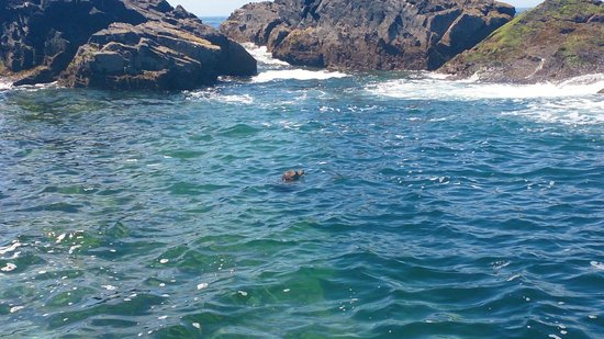 St Ives Boats: One of the seals