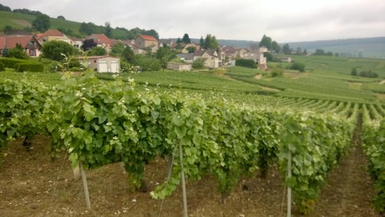 La Cave aux Coquillages: Town from the vineyards