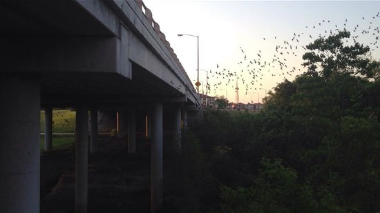 Waugh Drive Bat Colony