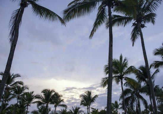 Sirenis Punta Cana Resort Casino & Aquagames: sunrise at the resort