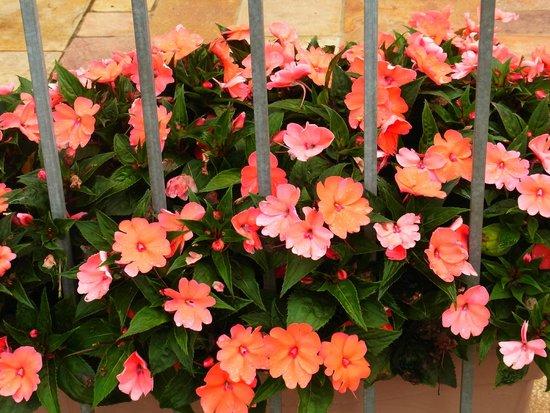 Ostello di Bergamo: Blumen am Hostel