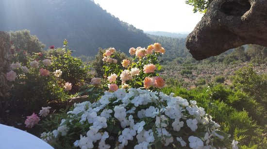 Finca Hotel Albellons Parc Natural : the sight in the morning
