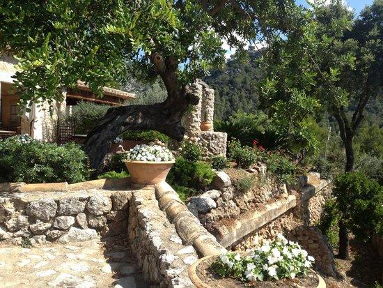Finca Hotel Albellons Parc Natural : flowers