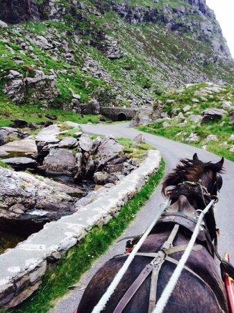 Larkinley Lodge: Pony & Trap ride on Gap of Dunlow Trip