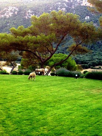 Finca Hotel Son Palou: daily visitors :)