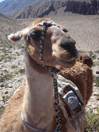Caravana De Llamas Day Tours: Pukka!