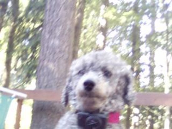 Gene Coulon Memorial Beach Park : Banned dog from Gene Coulon