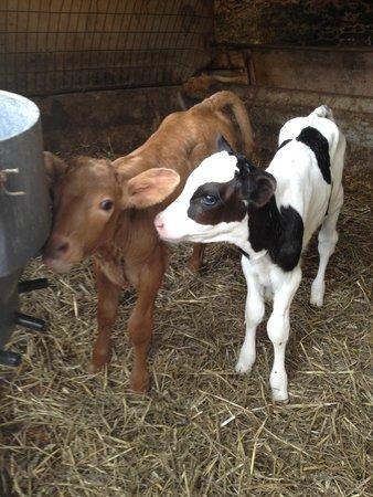 Great Court Farm: Recently born