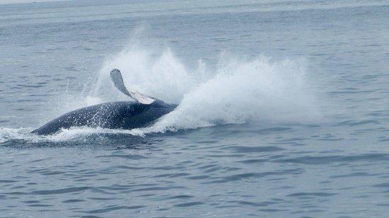 Cape Ann Whale Watch: Definately do this again!