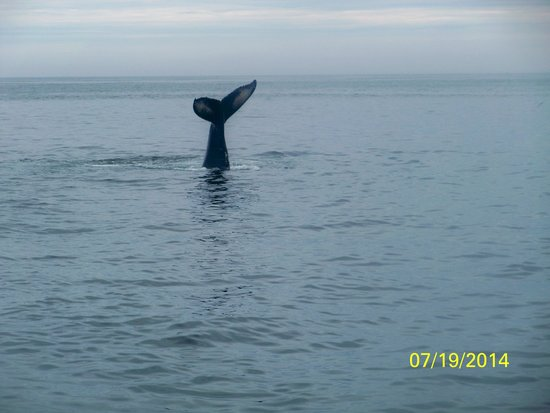 Cape Ann Whale Watch: We saw alot of tails
