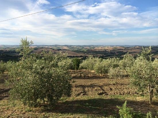 Agriturismo Canapina: panoramisch zicht vanaf het zwembad