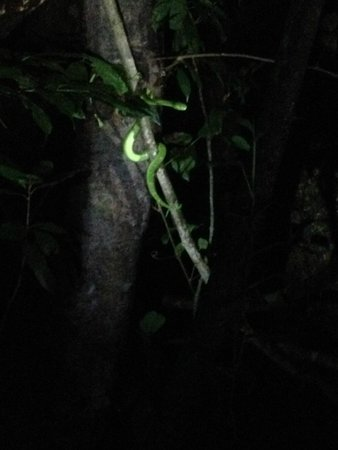 Monteverde Wildlife Refuge : Side Stripe Viper - Very cool!