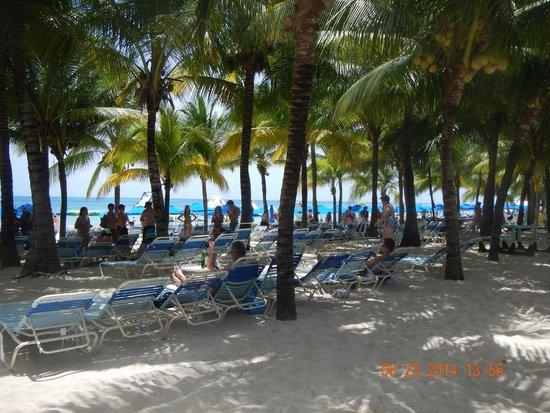 Paradise Beach: Plenty of shade