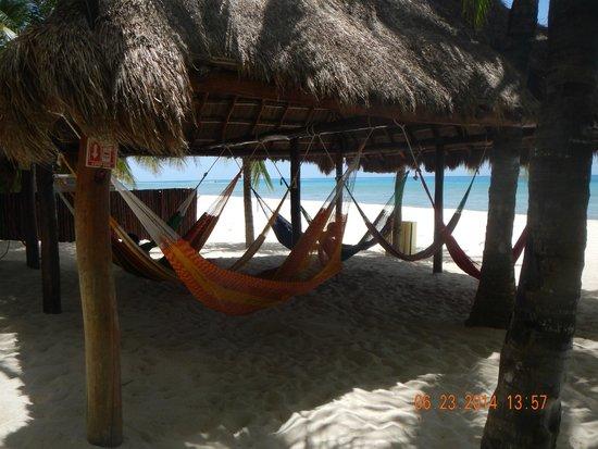 Paradise Beach: Hammocks