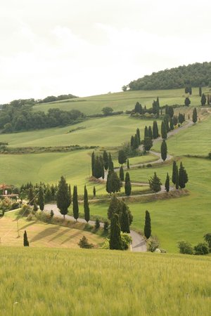 """Agriturismo Podere Santa Maria : This famous road from the movie """"Under the Tuscan Sun"""" was very close to Maura's house."""