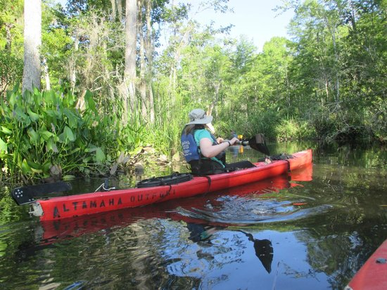 Altamaha Coastal Tours: Paddling around a curve on the Cathead Creek Loop.