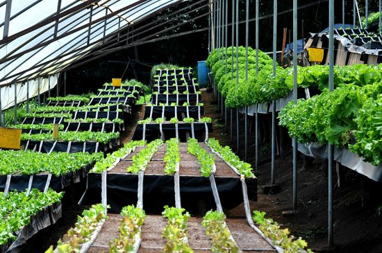 Los Pinos - Cabanas y Jardines: Greenhouses