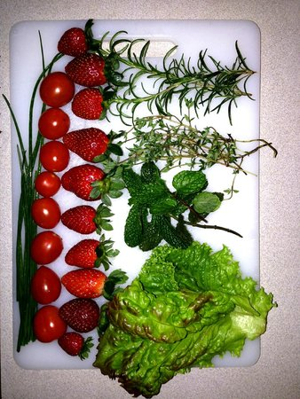 Los Pinos - Cabanas y Jardines: Fruits and veggies from the Greenhouses!