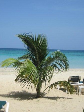 Hotel Riu Palace Tropical Bay: Awesome beach!