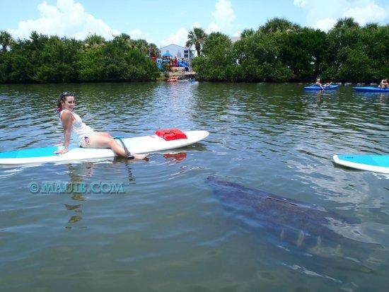 Maui B S Paddleboard Orlando Daytona New Smyrna Cocoa Beach