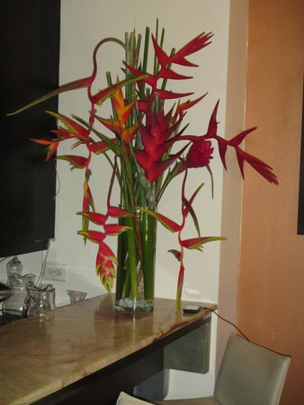 Cervantes: Beautiful Bird of Paradise in lounge