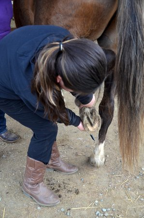 Tiger Lily Farm : cleaning hooves - horse camp
