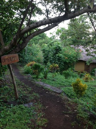 Totoco Eco-Lodge : Path to my Cabin