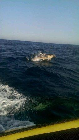 Dream Wave: dolfijnen