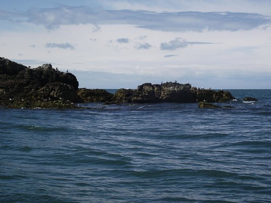 Starida Puffin Island Cruises & Sea Fishing Trips: A view from the vessel