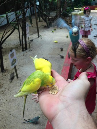 Langkawi Wildlife Park: hand feeding the budgie in the aviary.
