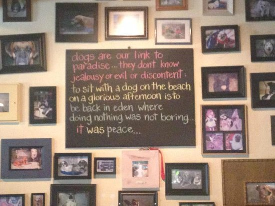 Lost Dog Cafe : Great Quote for Dog Lovers