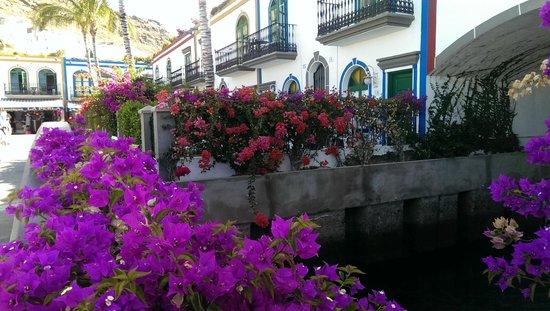 Marina Bayview: puerto mogan
