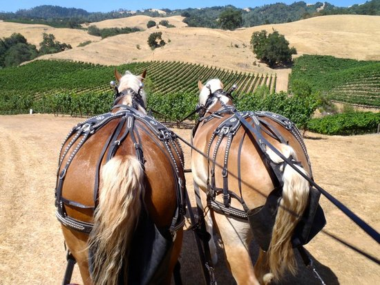 The Wine Carriage: Leaving Hanna Winery on our way to Soda Rock - interesting perspective!