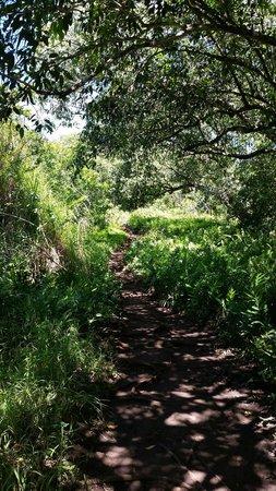 Pipiwai Trail: Beginning of trail