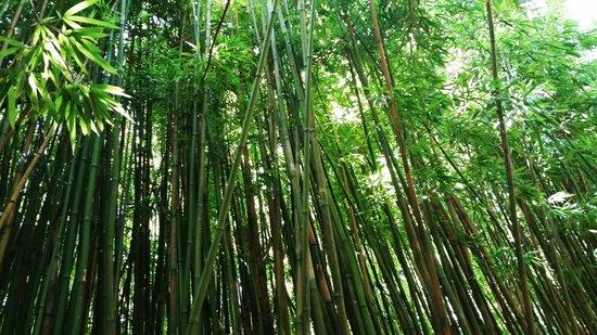 Pipiwai Trail: Bamboo Forest