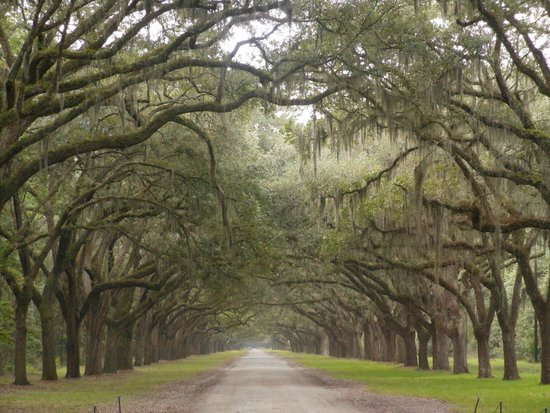 Wormsloe Historic Site : Gorgeous trip back in time ...