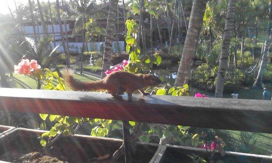 Melia Bali : squirrel