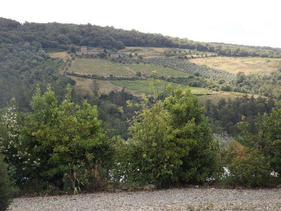 Fattoria Tregole: View from Trigole