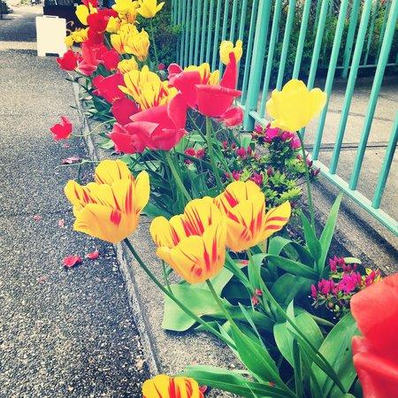 Caffe Amantes: springtime