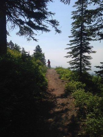 Whitefish Mountain Resort: mountain biking