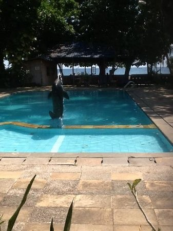 Bali Lovina Beach Cottages: pool