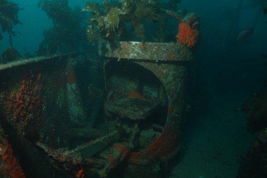 Paihia Dive: Gunseat (Canterbury Wreck)