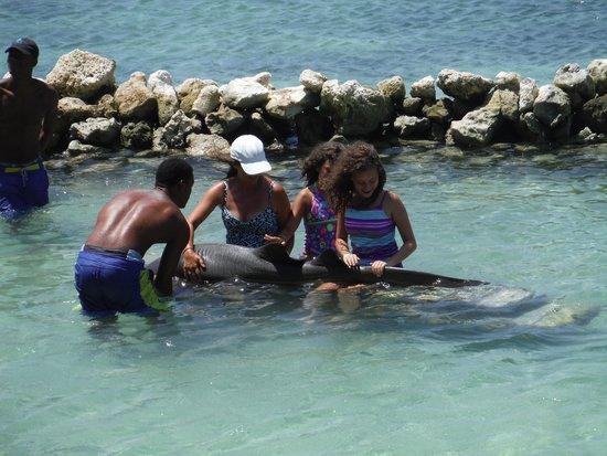 Dolphin Cove : Lap shark !