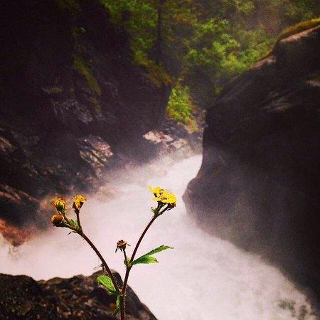 Alaska Backcountry Access LLC: Lone flower at the waterfall.