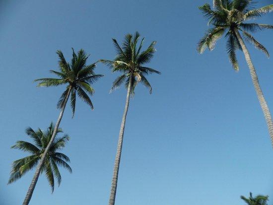 Punta Roca Surf Resort: hermosas palmeras