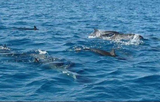 Tampa Water Taxi Company: dolphin fun!