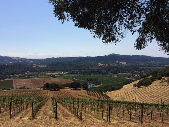 Kunde Family Winery : Mountain Top View