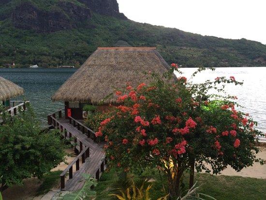 Club Bali Hai Moorea Hotel : View