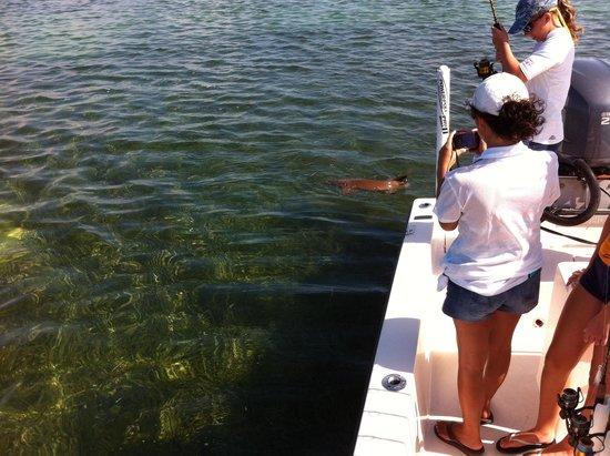 Key West Pro Guides: Nurse Shark